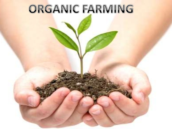 Switch to Natural Farming
